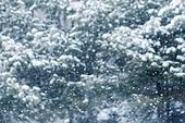 겨울, 눈 (얼어있는물), 날씨, 백그라운드, 백그라운드 (주제), 내리는눈