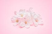 벚꽃, 꽃, 벚꽃축제, 봄, 분홍, 분홍 (색상), 꽃잎, 꽃송이
