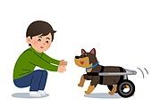 반려동물, 반려동물 (길든동물), 물리요법 (치료), 애완견 (개), 강아지