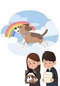 반려동물, 반려동물 (길든동물), 장례, 무지개, 강아지, 영정사진, 애완견 (개)