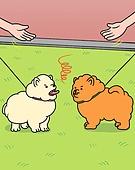 반려동물 (길든동물), 펫티켓, 애완견 (개), 강아지, 예절 (컨셉), 공원, 걷기 (물리적활동)