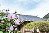 한국 (동아시아), 한옥, 한국문화, 무궁화