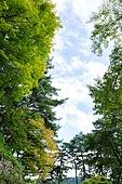 풍경 (컨셉), 식물, 나무