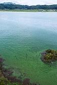 댐, 물 (자연현상), 녹조류, 환경오염