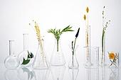 실험실장비, 과학실험 (사건), 의학 (과학), 연구 (주제), 유리, 시험관대, 실험유리기구, 원뿔플라스크, 플라스크, 식물, 잎, 꽃, 뷰티, 녹색 (색상)