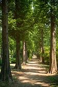 공원, 자연 (주제), 나무, 산책길, 메타세쿼이아 (나무)