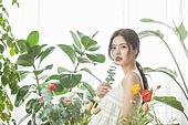 한국인, 미녀, 뷰티, 식물, 의료성형뷰티 (주제)