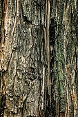 나무, 백그라운드, 백그라운드 (주제), 나무결, 목재