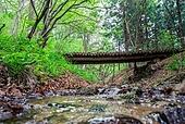 숲, 숲속, 자연 (주제), 자연풍경 (교외전경), 환경, 풍경 (컨셉), 계곡