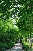 산책길, 산책길 (보행로), 공원