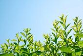 자연 (주제), 환경, 잎, 잎 (식물부분), 식물