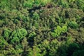 숲, 산, 자연 (주제)