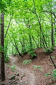 숲, 숲속, 자연 (주제), 자연풍경 (교외전경), 환경, 풍경 (컨셉), 나무