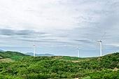 숲, 숲속, 자연 (주제), 자연풍경 (교외전경), 환경, 풍경 (컨셉), 선자령, 풍력, 풍력터빈 (터빈), 풍차, 대체에너지
