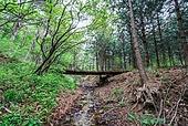 숲, 숲속, 자연 (주제), 자연풍경 (교외전경), 환경, 풍경 (컨셉), 계곡, 산림