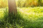 풀 (식물), 햇빛 (빛효과), 나무기둥