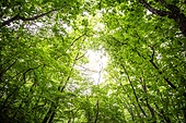나무, 산림, 숲