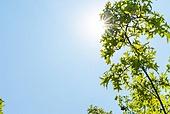 여름, 폭염, 뜨거움 (컨셉), 폭염 (자연현상), 여름 (계절), 햇빛, 태양, 맑은하늘 (하늘)