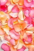 꽃, 분홍, 백그라운드, 장미, 잎