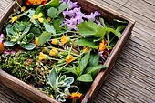 Natural herbal medicine with herbs and flowers on rustic wood background.Assorted natural medical herbs. Healing herbs in wooden box