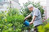 정원, 노인 (성인), 노인남자 (성인남자), 흩뿌리기 (움직이는활동)