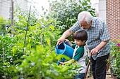 정원, 노인 (성인), 노인남자 (성인남자), 흩뿌리기 (움직이는활동), 할아버지 (조부모), 소년