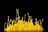 물 (자연현상), 파장, 파문 (물체묘사), 백그라운드, 패턴, 물결, 방울 (액체), 잉크, 페인트 (예술도구), 모션, 활력, 수채물감, 추상, 미술 (미술과공예), 번짐, 재질 (물체묘사), 컬러, 노랑색 (색상)