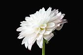 백그라운드, 패턴, 재질 (물체묘사), 컬러, 꽃, 식물, 꽃잎