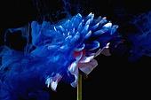 물 (자연현상), 파장, 파문 (물체묘사), 백그라운드, 패턴, 물결, 방울 (액체), 잉크, 페인트 (예술도구), 모션, 활력, 수채물감, 추상, 미술 (미술과공예), 번짐, 재질 (물체묘사), 컬러, 꽃, 식물, 파랑, 꽃잎