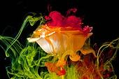물 (자연현상), 파장, 파문 (물체묘사), 백그라운드, 패턴, 물결, 잉크, 페인트 (예술도구), 모션, 활력, 수채물감, 추상, 미술 (미술과공예), 검정배경, 번짐, 재질 (물체묘사), 컬러, 섞기 (움직이는활동), 장미, 꽃, 식물, 꽃잎, 노랑색 (색상), 빨강