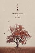 가을, 백그라운드, 풍경 (컨셉), 계절, 단풍철, 단풍나무 (낙엽수)