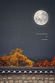 가을, 백그라운드, 풍경 (컨셉), 계절, 단풍철, 야경, 밤 (시간대), 단풍나무 (낙엽수), 보름달