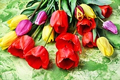 Bunch of spring beautiful tulip flower. bouquet red,yellow and purple tulips on green background