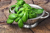 Close up basil leaves