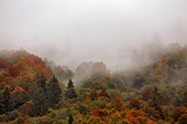 Autumn rain in Carpathian mountain forest. Colorful wood in clouds of fog