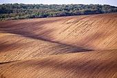 Spring arable land. Spring wavy agriculture scene. Rural landscape of South Moravia