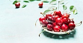 Bowl with fresh red cherry berries on light blue background, front view. Summer fruit concept