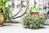 Beautiful  patio with flowerpots and flowers, container planting and gardening, outdoor