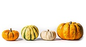 Various Pumpkin on white background, flat lay, border, front view. Thanksgiving symbol