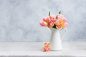 fresh pink and yellow tulips in white vase on gray background. Pink and yellow tulips