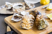 Raw oysters closed shells on wooden cutting board. Raw oysters shells