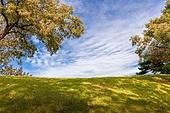 풍경 (컨셉), 공원, 풀이나있는길 (길가), 잔디밭 (경작지), 잔디밭, 가을 (계절)