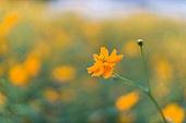 가을, 가을 (계절), 꽃, 식물 (동식물), 감성 (컨셉)