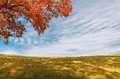 가을, 감성, 자연 (주제), 자연명소 (랜드마크), 공원, 풀이나있는길 (길가), 잔디밭 (경작지)
