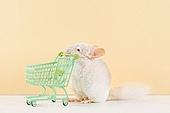 2020년, 2020, 새해 (홀리데이), 실험쥐, 쥐 (쥐류), 쥐띠해 (십이지신), 쥐류, 쇼핑카트 (소매업장비)