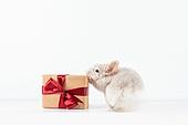 2020년, 2020, 새해 (홀리데이), 실험쥐, 쥐 (쥐류), 쥐띠해 (십이지신), 쥐류, 선물상자