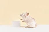 2020년, 2020, 새해 (홀리데이), 실험쥐, 쥐 (쥐류), 쥐띠해 (십이지신), 쥐류