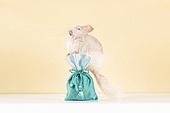 2020년, 2020, 새해 (홀리데이), 실험쥐, 쥐 (쥐류), 쥐띠해 (십이지신), 쥐류, 복주머니 (한국문화)