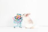 2020년, 2020, 새해 (홀리데이), 실험쥐, 쥐 (쥐류), 쥐띠해 (십이지신), 쥐류, 쇼핑카트 (소매업장비), 복주머니 (한국문화)