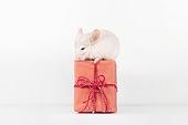 2020년, 2020, 새해 (홀리데이), 실험쥐, 쥐 (쥐류), 쥐띠해 (십이지신), 쥐류, 선물상자, 선물 (인조물건)